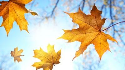 Jesenji noviteti